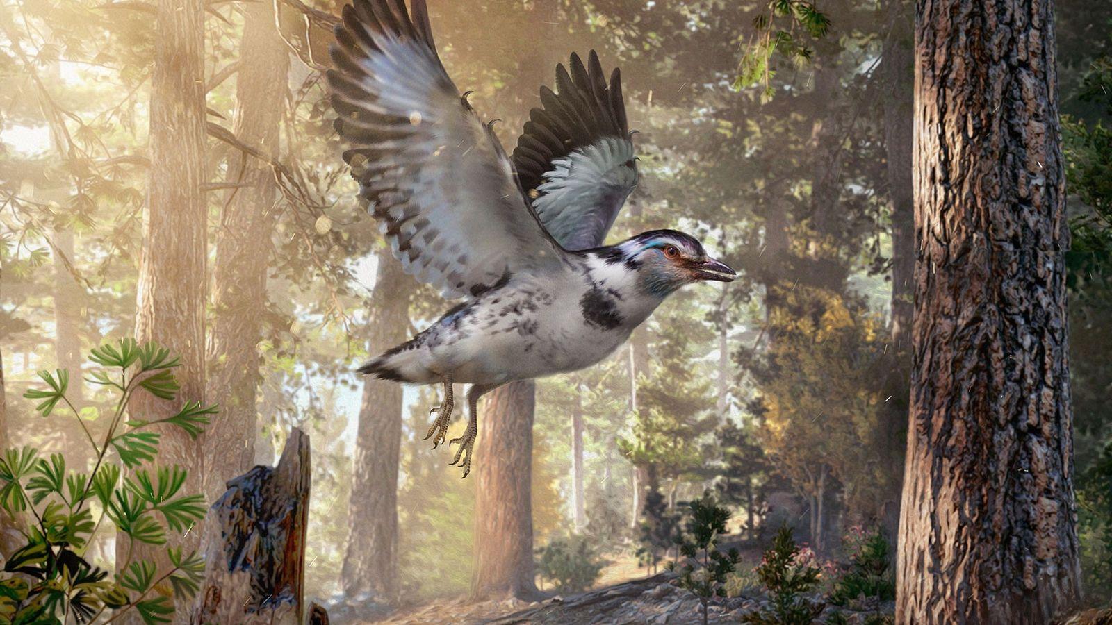 Uma reconstrução do Jinguofortis perplexus, um pássaro da era dos dinossauros que viveu onde hoje é ...