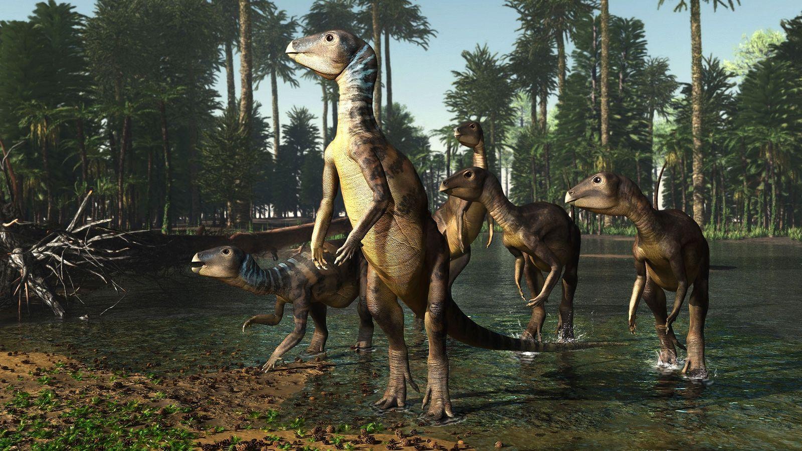 Ilustração de um bando de Weewarrasaurus atravessando um rio raso onde hoje é a Austrália.