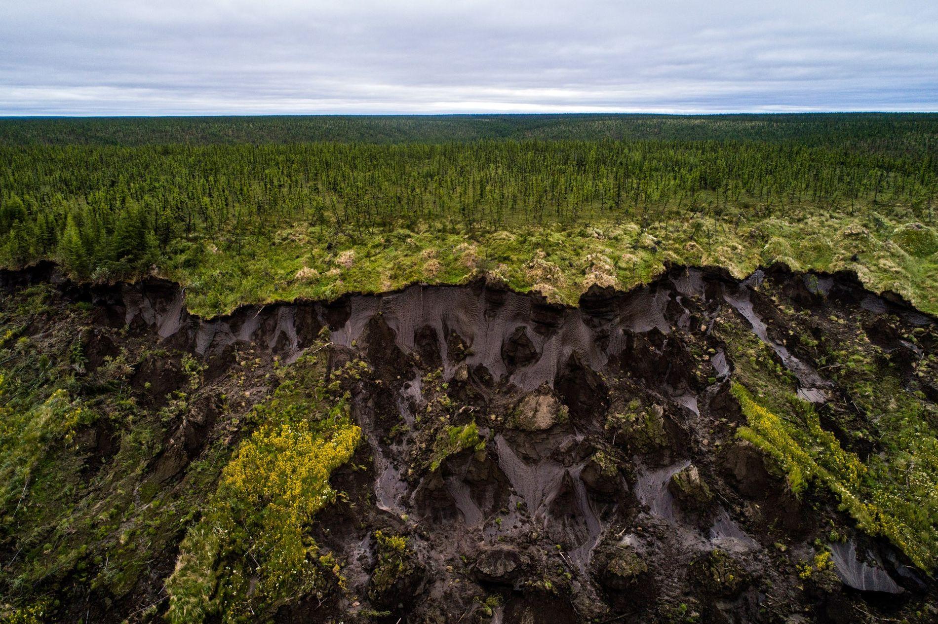 O chão afunda em Duvanny Yar, um megadesmoronamento de permafrost ao longo do rio Kolyma no norte da Sibéria. Novos estudos sugerem que parte da terra no Alasca Ártico e na Rússia nem sequer congelam mais. Este local de constantes deslizamentos móveis, causados pela erosão e acelerados pelo aumento das temperaturas, é um local importante de pesquisa para os cientistas, que o utilizam para monitorar o que acontece quando começa o derretimento em uma região rica em carbono congelada há séculos.