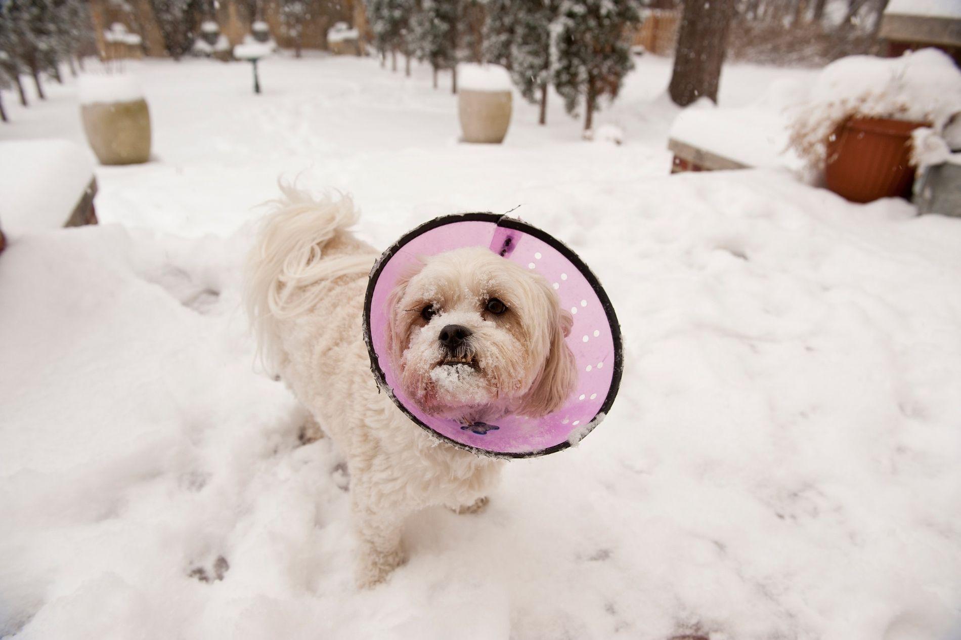 Cães mais jovens e menores são mais propensos a envenenamentos acidentais com opioides, segundo nova pesquisa.