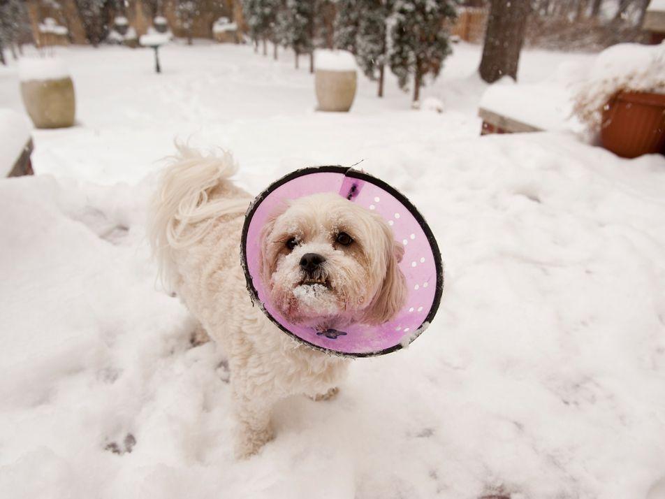 Cães também são vítimas da crise dos opioides, que inclui heroína e analgésicos