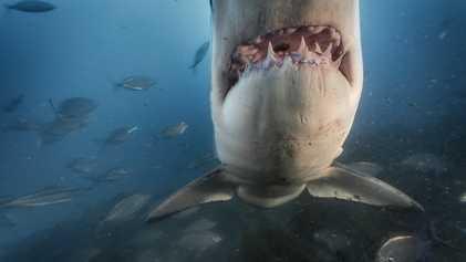 Por que temos tanto medo de tubarão? Há uma explicação científica