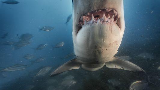 12 fotos incríveis revelam como vivem os tubarões