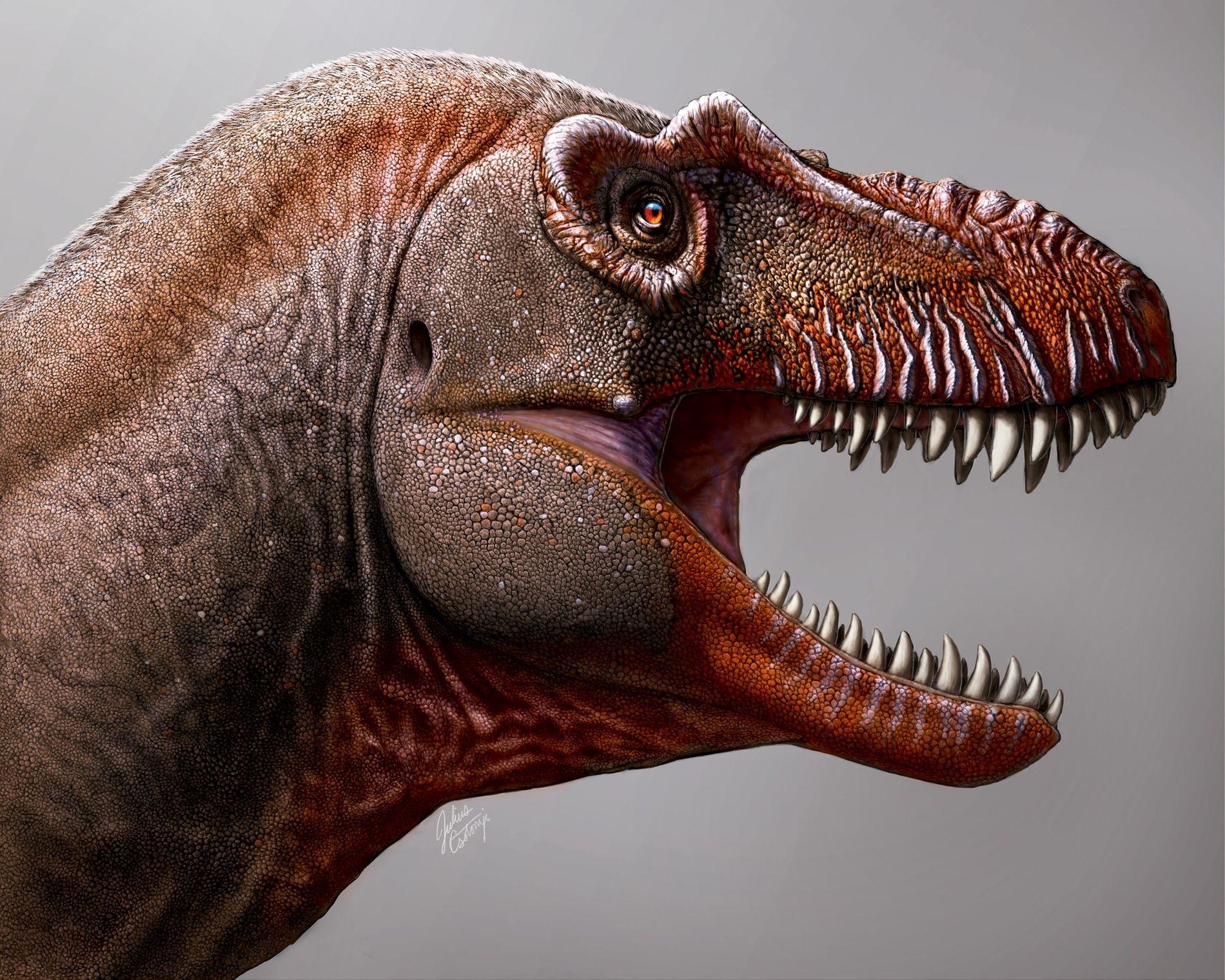 Aos olhos leigos, muitos tiranossauros parecem idênticos. O Thanatotheristes, porém, tem diversas características que o diferenciam ...