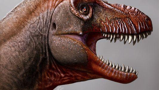 Raro tiranossauro de semblante assustador ajuda a montar quebra-cabeça evolutivo