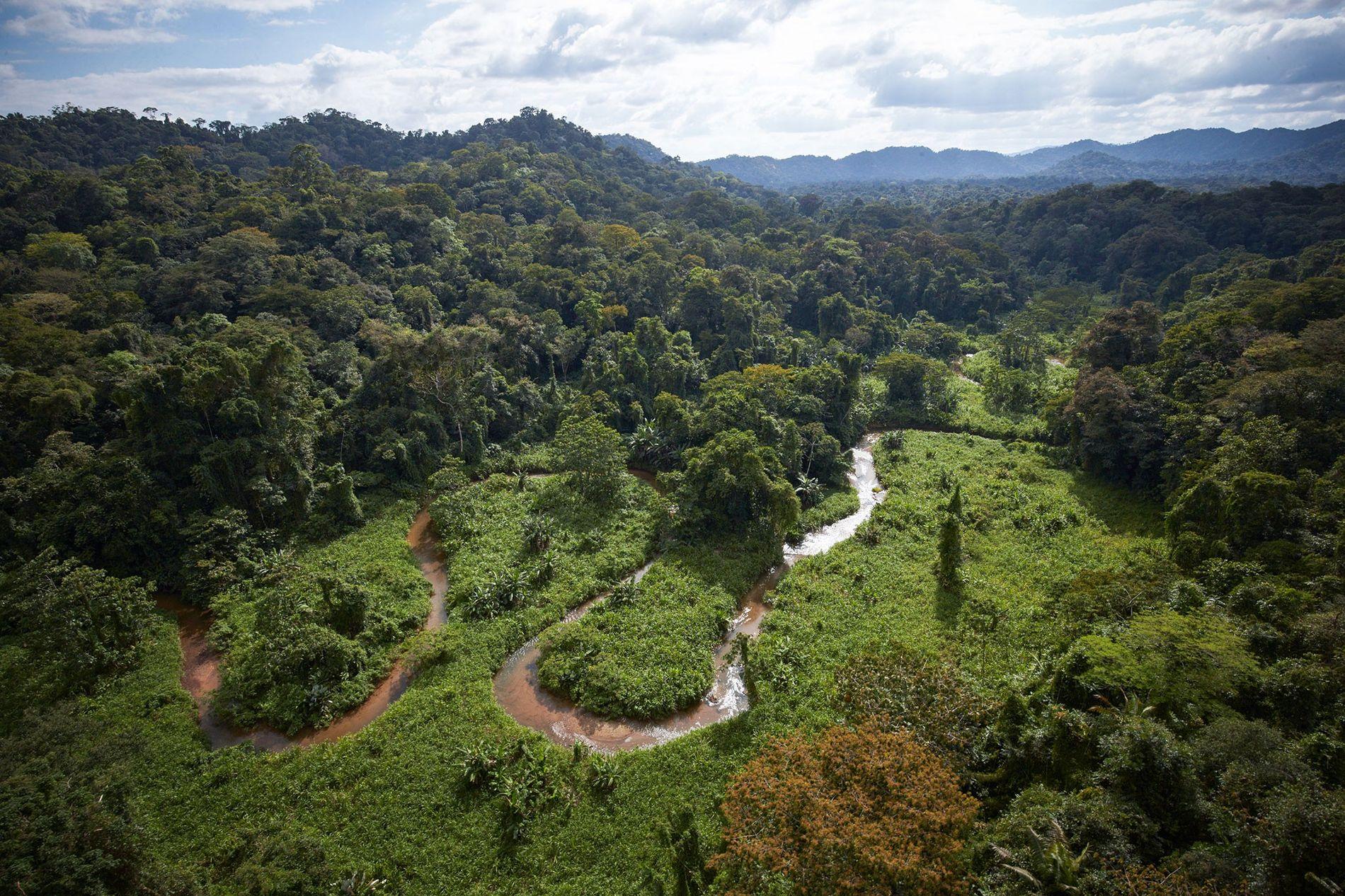 lidar-árvores-florestas-honduras-arqueologia