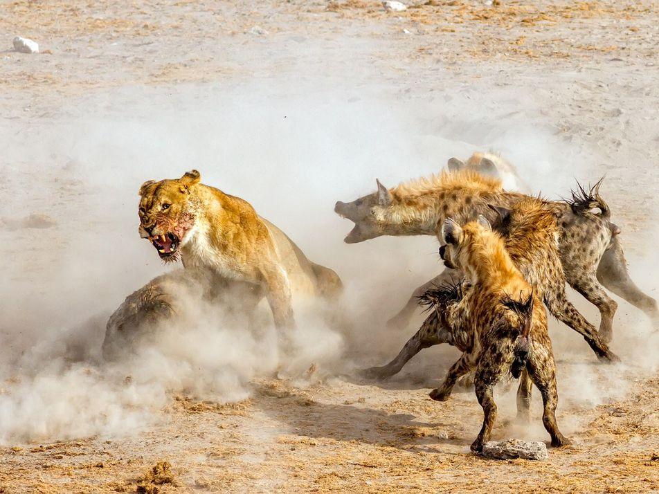 Fotogênicos e em ação: confira 39 fotos de animais em movimento
