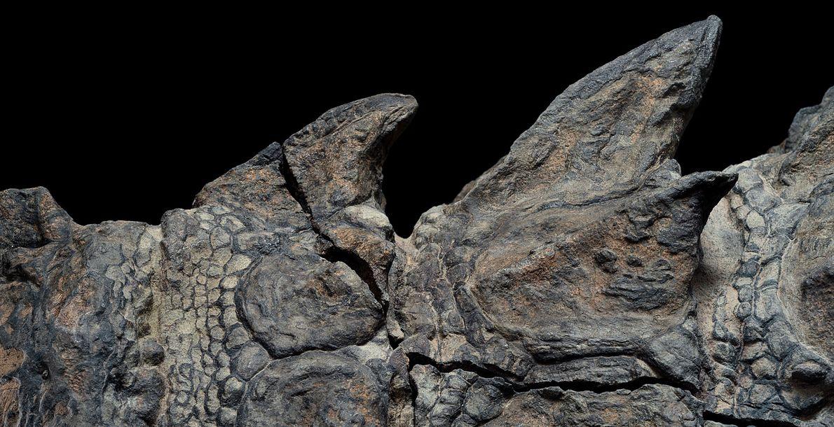nodossauro-nova-especie-de-dinossauro-fossil-incrivel-02