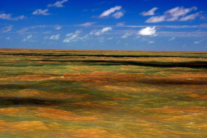 recife-de-coral-da-amazonia-aguas-lamacentas