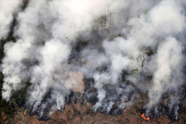 Incêndio em uma área da floresta amazônica perto de Porto Velho, estado de Rondônia, em 21 ...