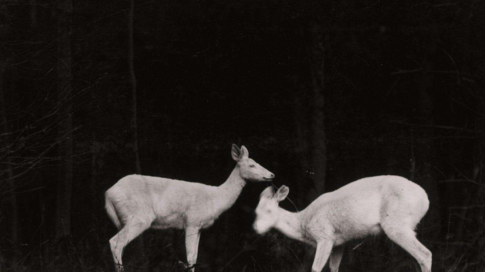 130-anos-national-geographic-society-fotos-de-vida-selvagem
