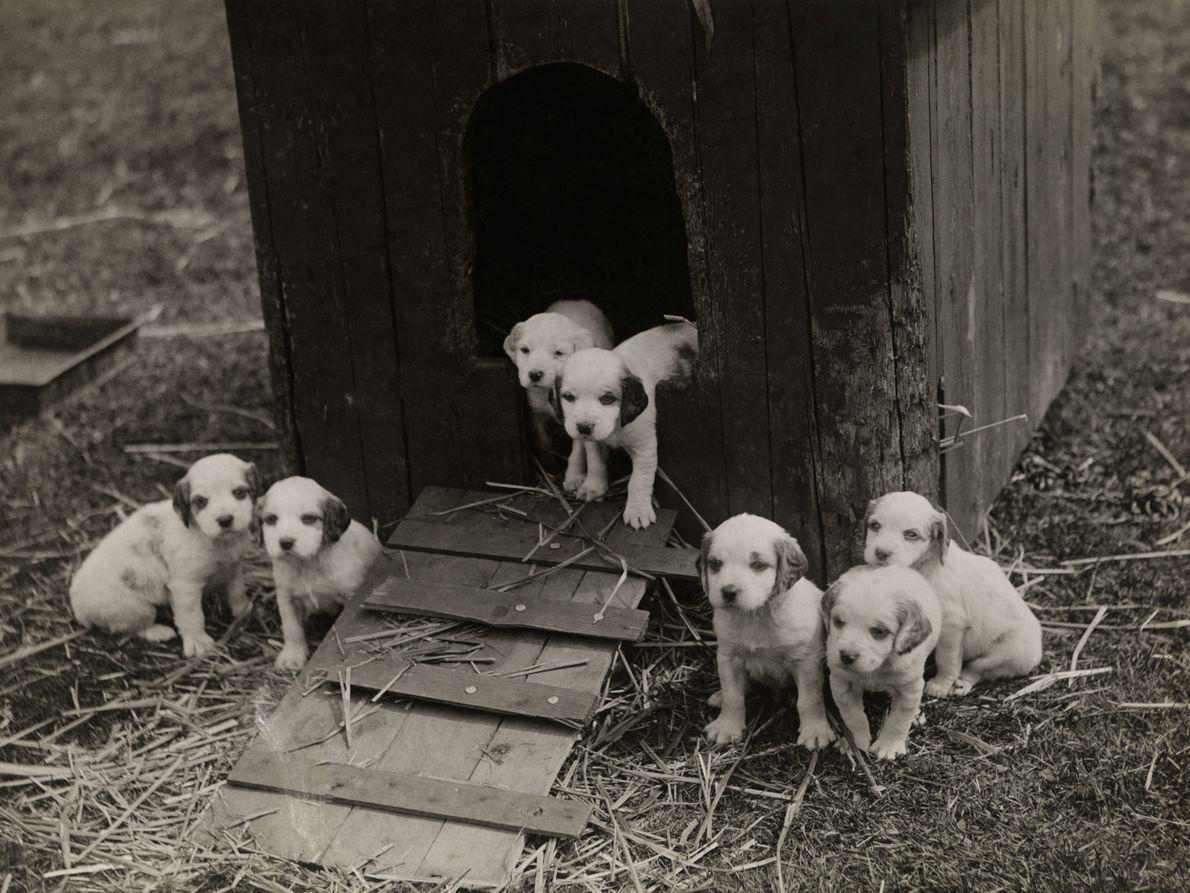 arquivo-filhotes