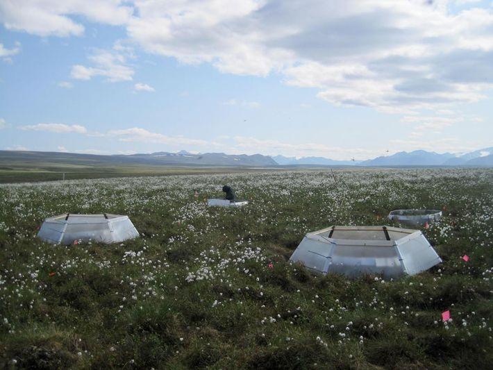 Lotes experimentais foram usados para testar os efeitos das densidades alteradas da aranha-lobo e do aquecimento ...