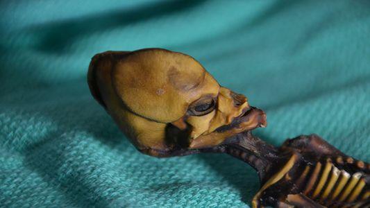 """Aparência da pequena múmia """"alienígena"""" é finalmente explicada"""