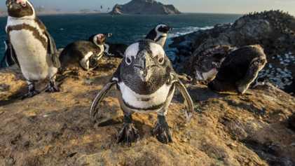 Fotos incríveis de aves na natureza
