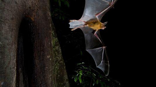 Por que alguns morcegos caçam durante o dia