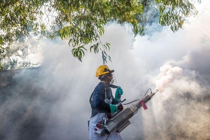 Um homem pulveriza para matar o mosquito Aedes, que carrega o vírus da febre amarela, em ...