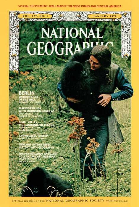 O registro em primeira pessoa da vida de Fossey com os gorilas da montanha foi capa da edição de janeiro de 1970 da National Geographic.