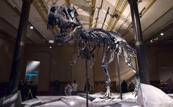 dinossauro-asteroide-chicxulub