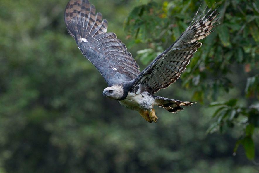 As mulheres que lutam pela conservação de espécies símbolos da fauna brasileira
