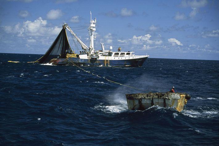 Este barco está pescando atum, espécie comum em alto-mar.