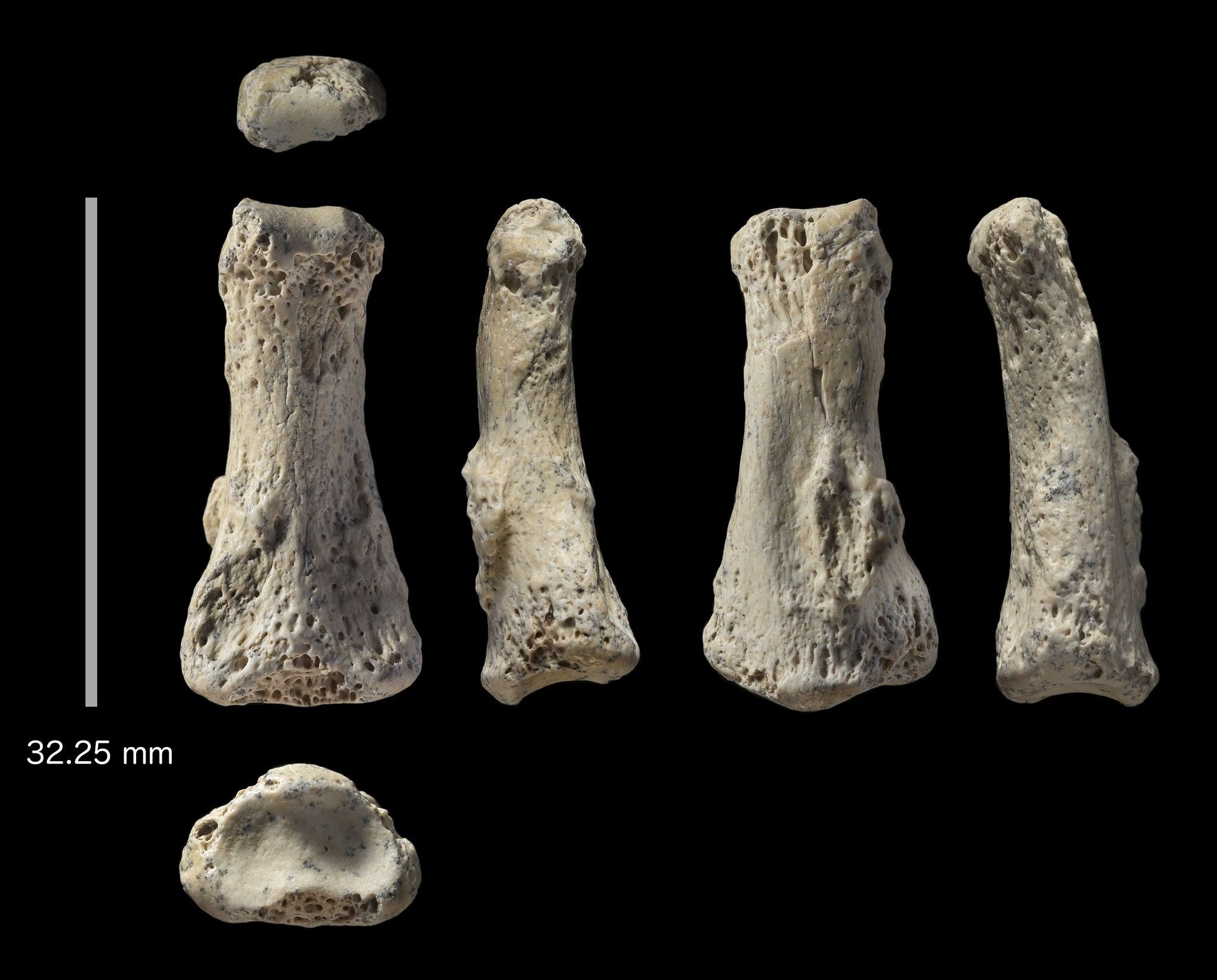 Osso de dedo de 88 mil anos desafia a ciência sobre data de migração humana | National Geographic