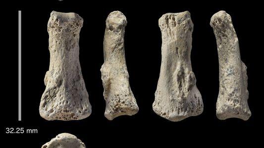 Osso de dedo de 88 mil anos desafia a ciência sobre data de migração humana