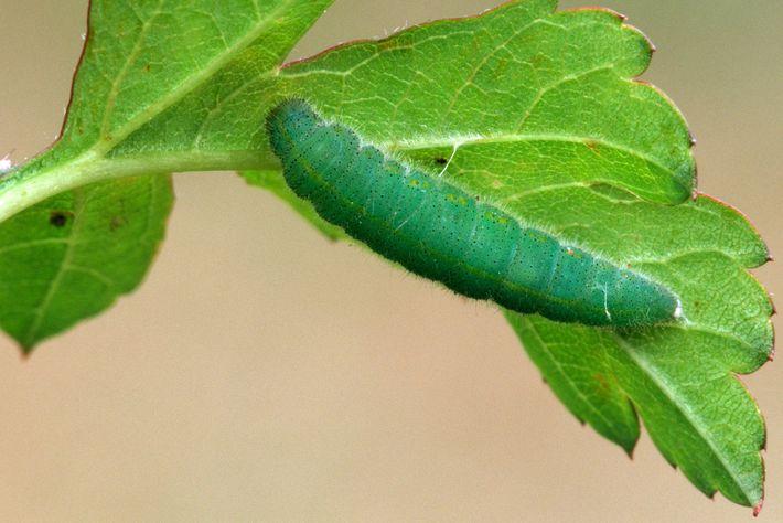 comportamento-de-insetos