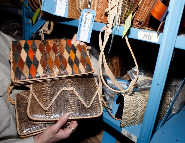 Uma bolsa feita de pele de cobra foi apreendida pela polícia e agora está armazenada no ...