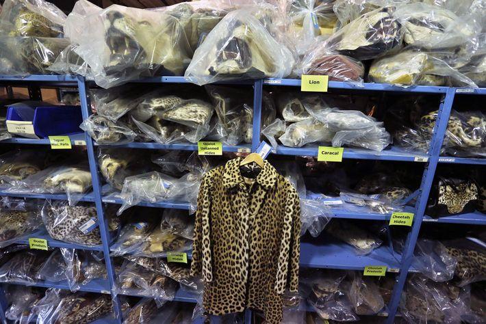Uma jaqueta de pele de leopardo confiscada pela polícia exposta em prateleiras repletas de outros produtos ...