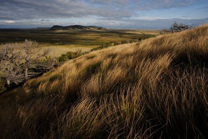 As Grandes Planícies do norte, que englobam essa parte em Montana, abrangem mais de 72 milhões ...