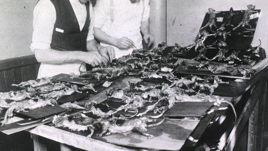 Autoridades tentaram encobrir a peste bubônica quando ela atingiu os Estados Unidos