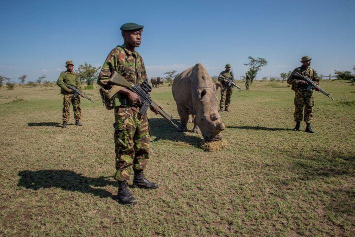 morte-sudan-extincao-especie