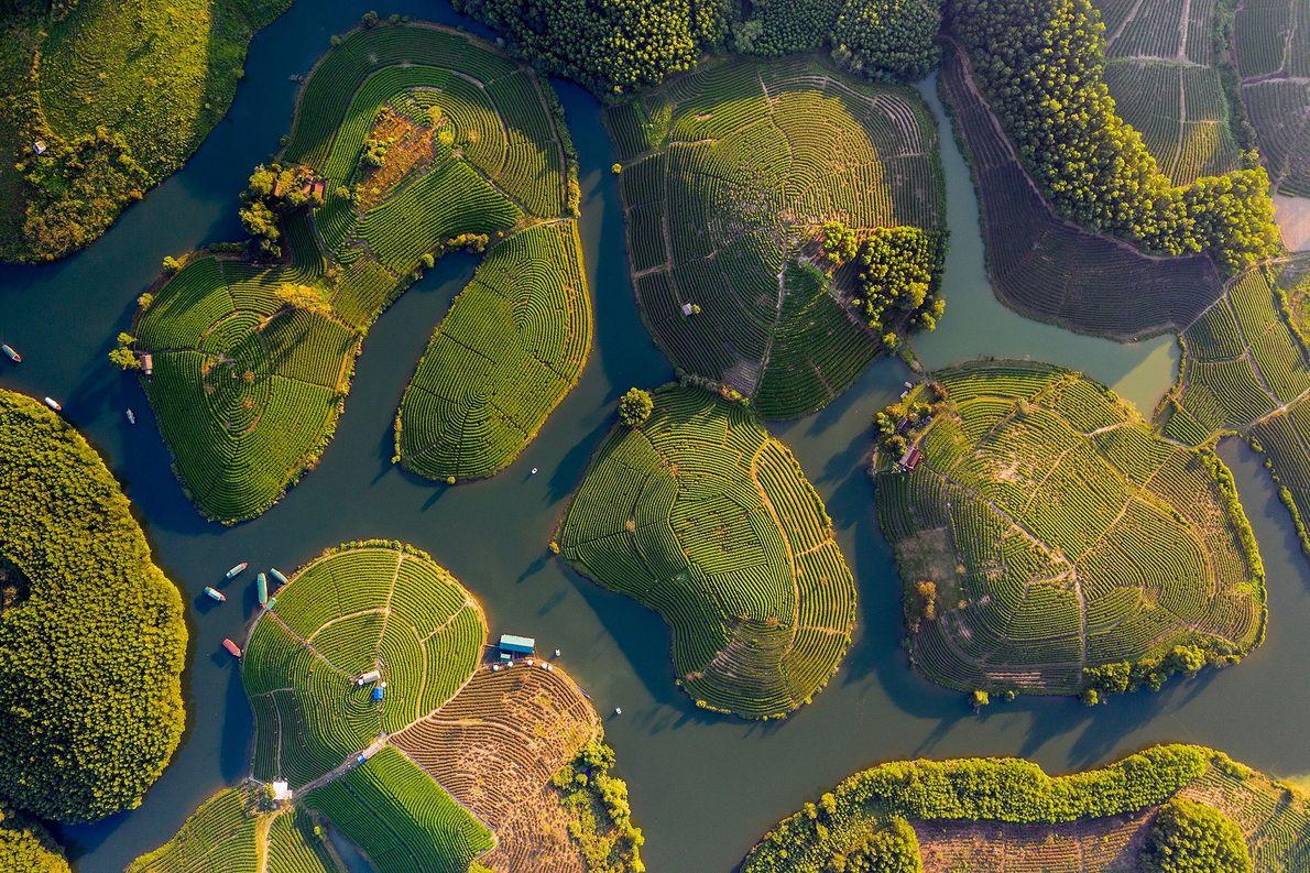 Ilhas de chá verde pontilham um lago de irrigação perto da fronteira do Vietnã com o ...