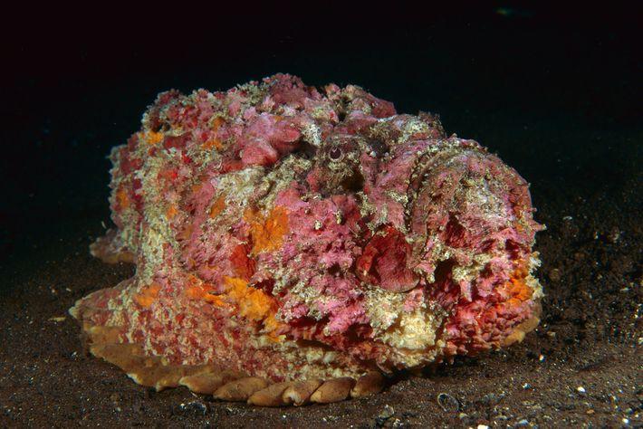 Você pode achar que isso é um coral. Mas não é — na verdade é um ...