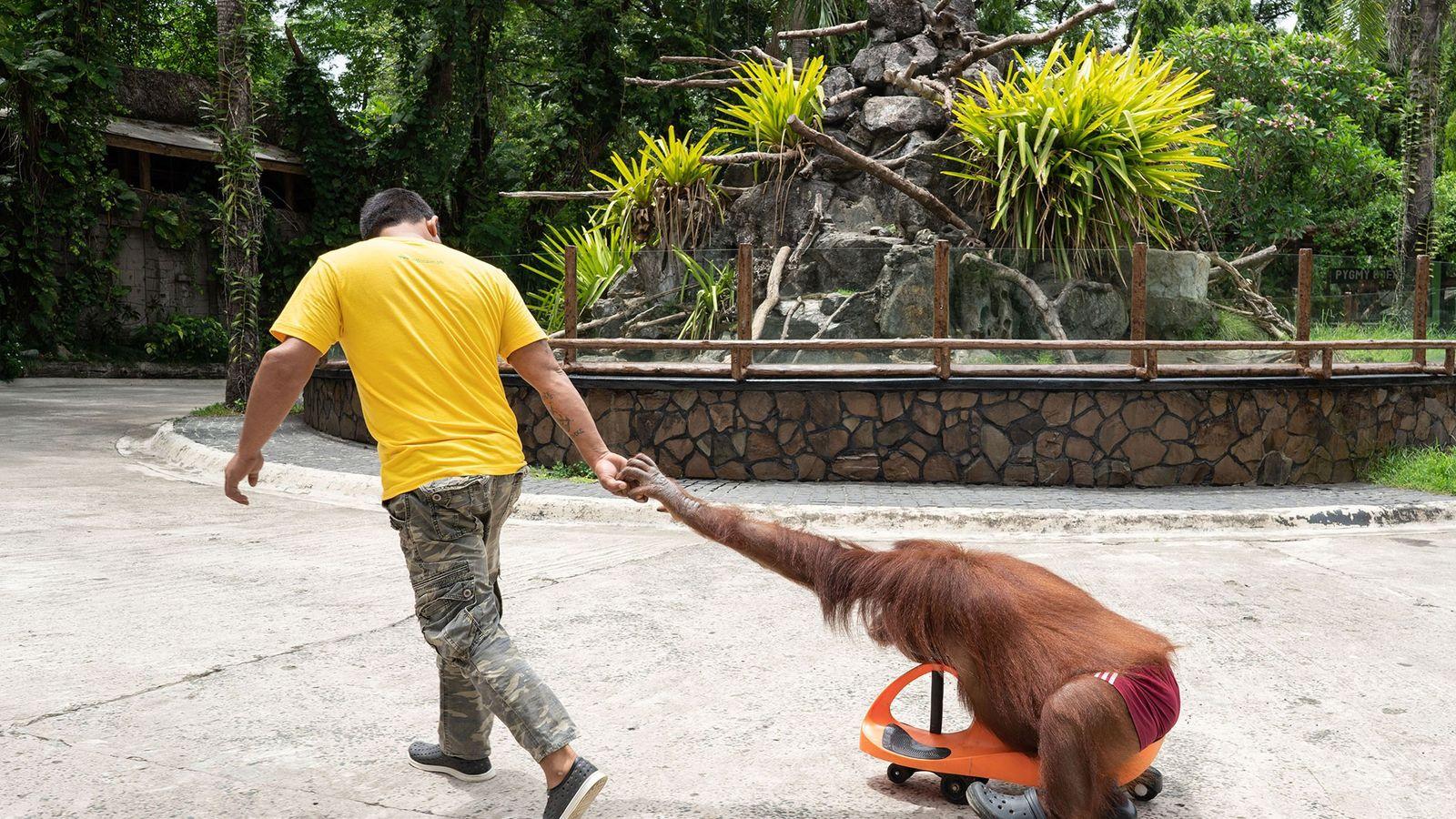 Relatório organizado pela organização World Animal Protection, a World Association of Zoos and Aquariums é criticada ...