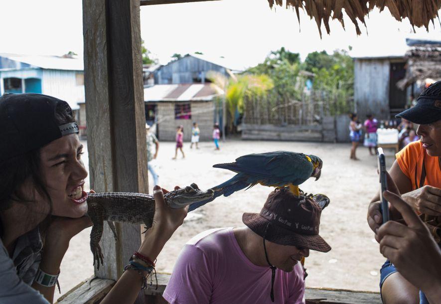 Turistas posam para fotos com jacaré e arara em Puerto Alegría, Peru. Animais tirados da floresta ...