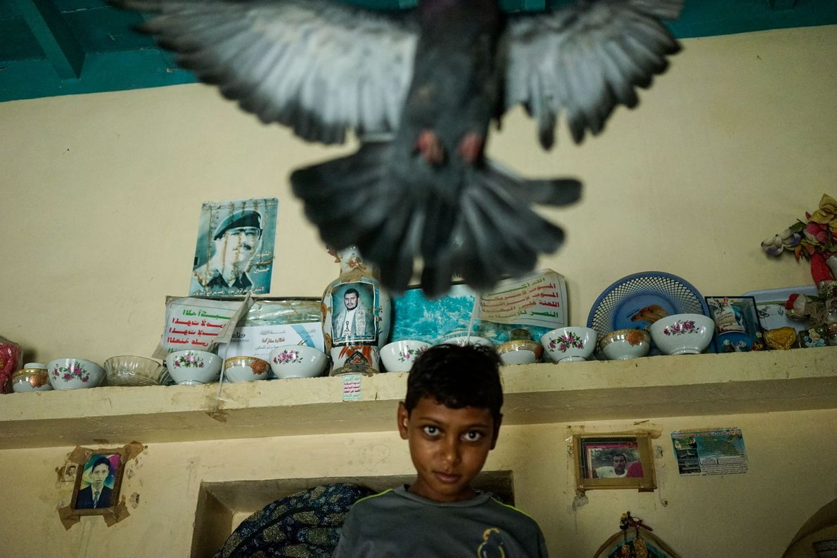 Garoto brinca com um pombo do distrito de Zohra, região noroeste de Hodeida, cidade portuária do ...
