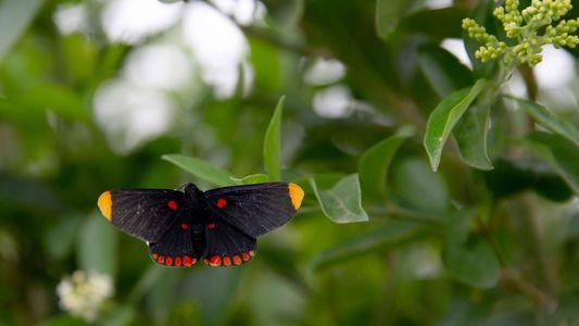 Santuário de borboletas será atravessado pelo muro da fronteira dos EUA