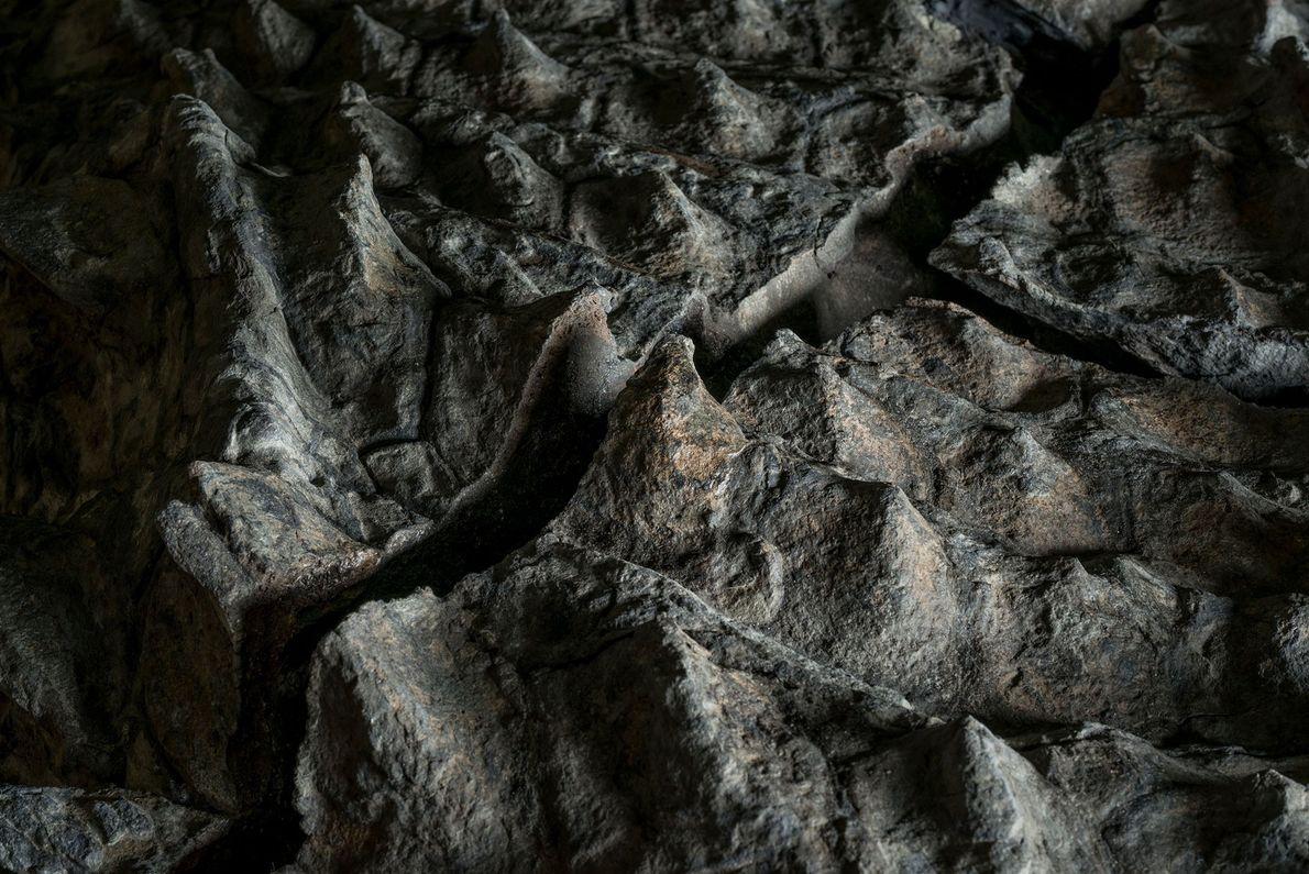 Esta imagem mostra placas blindadas no fóssil espetacularmente completo de um anquilossauro chamado Borealopelta markmitchelli; as ...