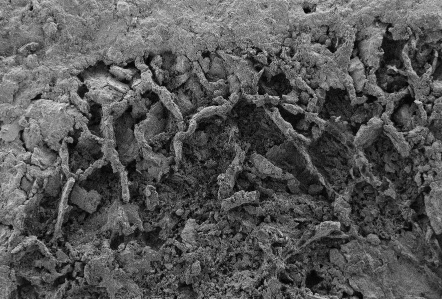Filamentos de fungos fossilizados visíveis no xisto, encontrado na República Democrática do Congo. Vários microrganismos são ...