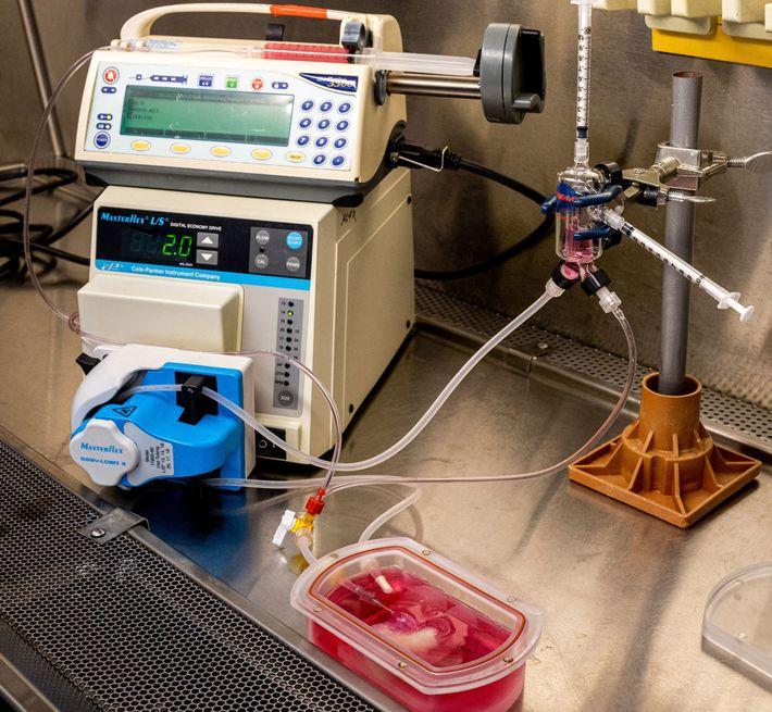 Um dispositivo chamado biorreator sustenta o minifígado, fornecendo oxigênio e nutrientes. Esse sistema permite que os ...