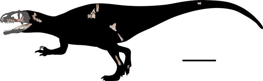 Pesquisadores reconstruíram em escala o esqueleto do Siamraptor suwati com os 22 fósseis recém-encontrados. A linha na escala equivale a um metro.
