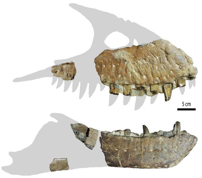 Por enquanto, os fragmentos cranianos são tudo o que resta do Thanatotheristes. Embora seja possível que ...