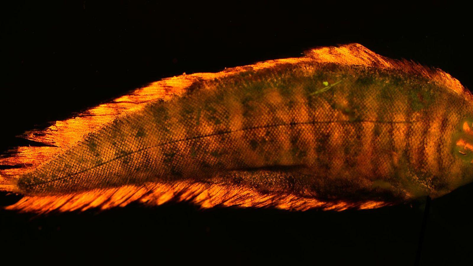 galeria-de-fotos-animais-que-brilham-no-escuro