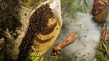 Doces e cheias de graça: O esplendor das abelhas em 10 imagens
