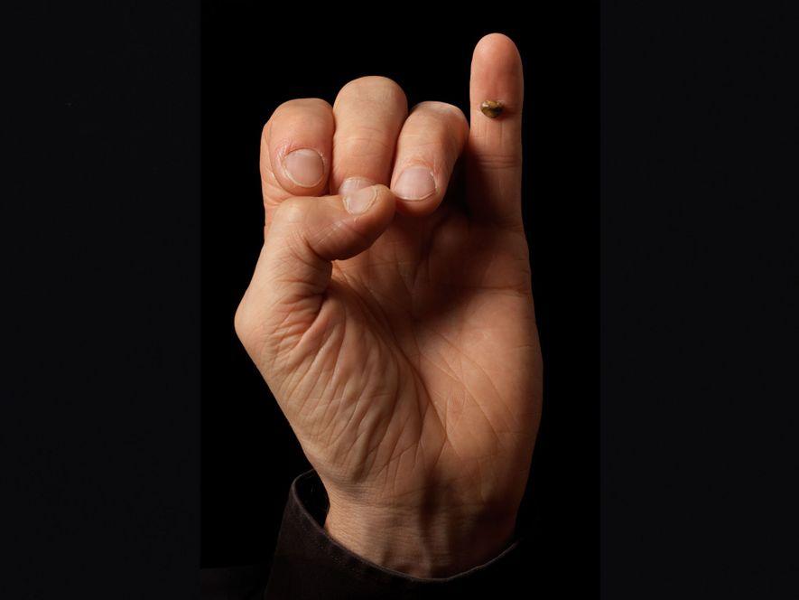 Uma réplica da lasca do osso que permitiu a descoberta dos Denisovanos no dedo mínimo do ...