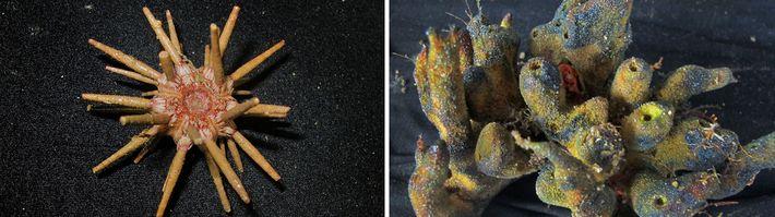 03-amazonia-coral-descoberta