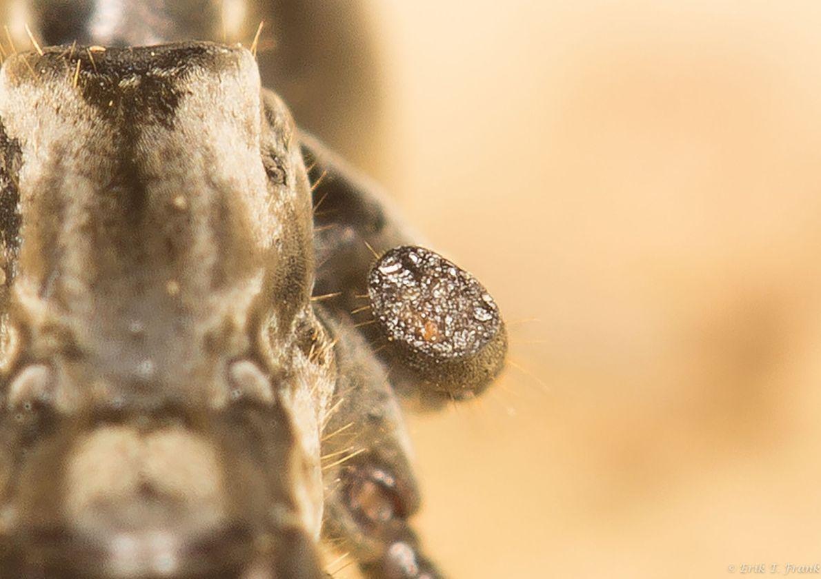 triagem-formigas-paramedicas