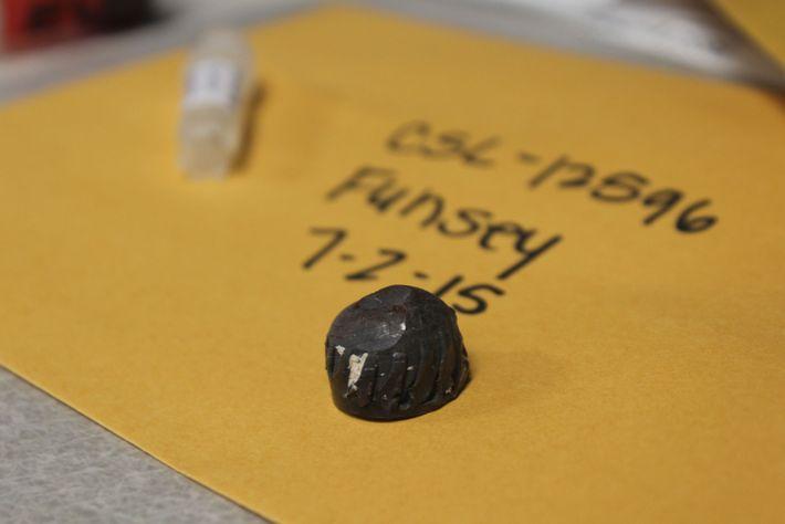 O Centro de Mamíferos Marinhos, em Sausalito, Califórnia guarda fragmentos de balas removidas de leões-marinhos como ...